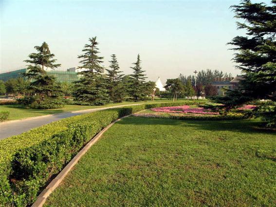 朝阳公园图片4